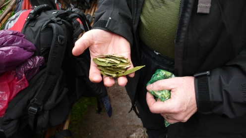 Coca leaves to chew on the tough hike ahead.