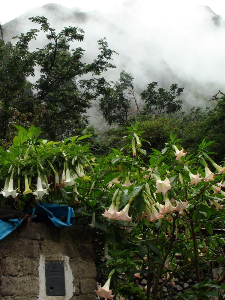 Inca Trail Day One, a Mystery: Llactapata or Patallacta? (3/6)