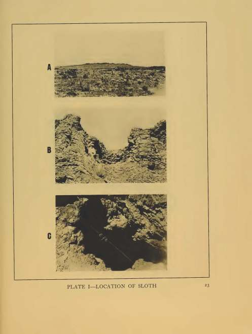 "Old location photographs: ""A Remarkable Ground Sloth"" Yale University Press 1929"