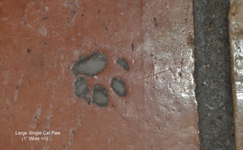 Single Cat Print in Saltillo tile