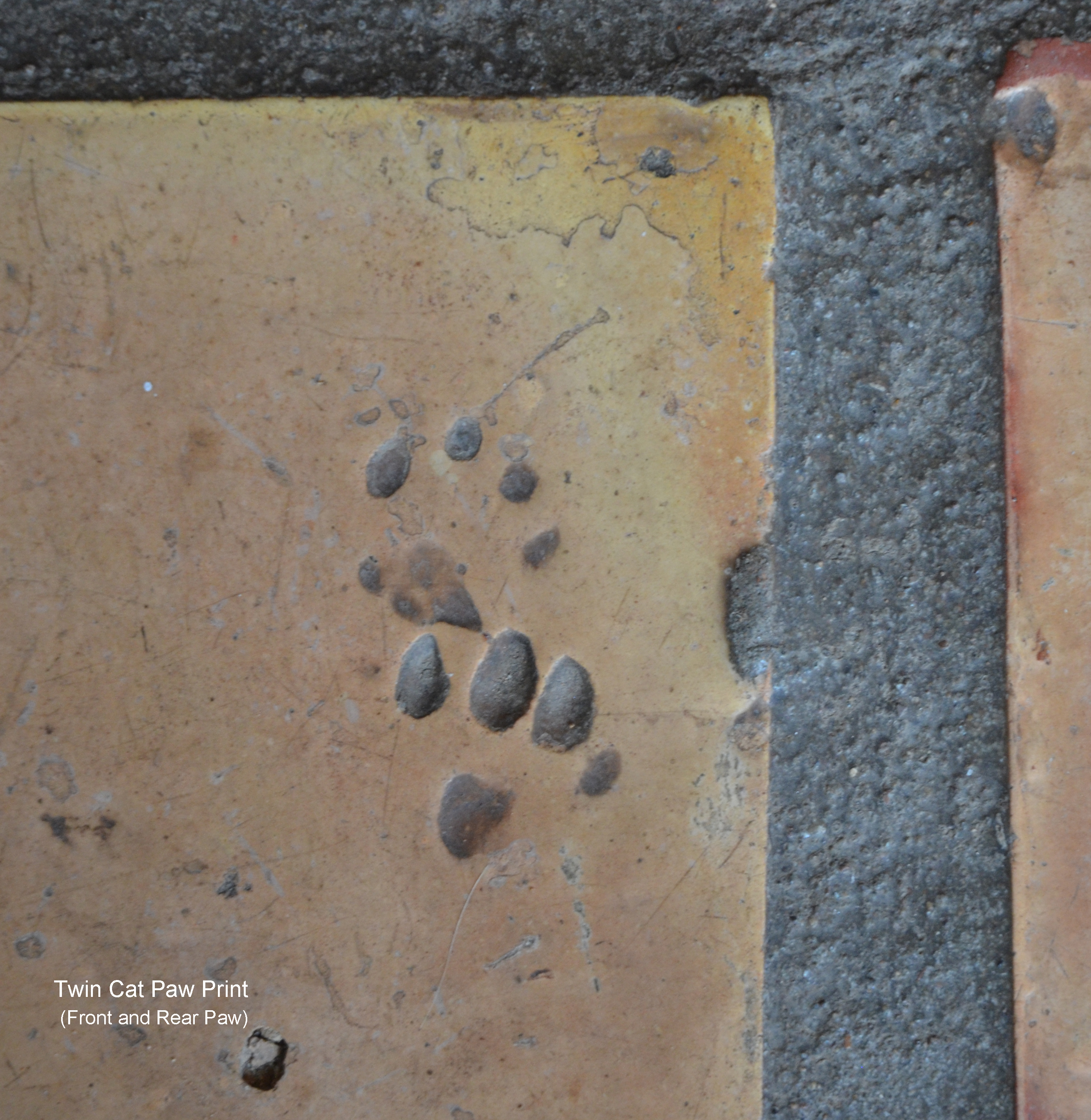 Footprints Captured In Clay Dave Etzold S Blog