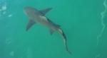 Shark-Spanish Cay